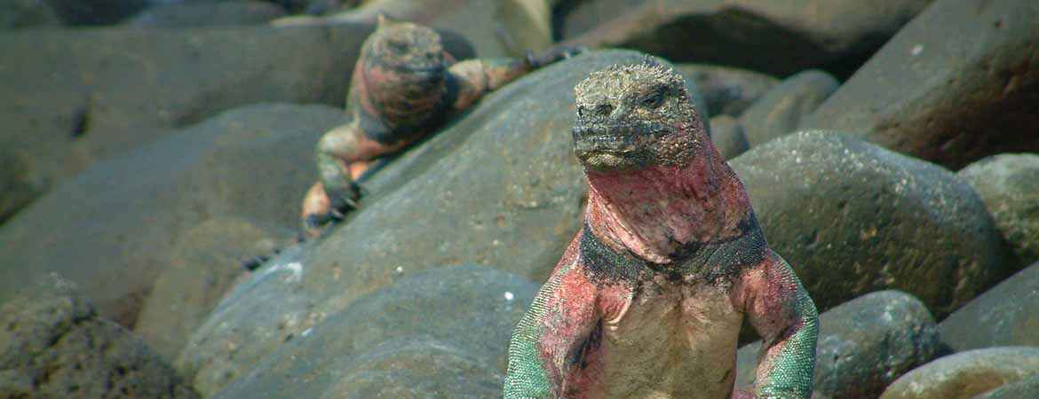 New Year in Galapagos